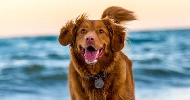 hundehalsband-gps-sinnvoll-test